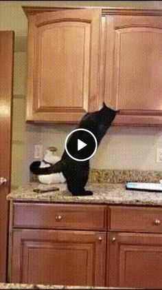 cute cats and kittens videos Click the Photo For More Adorable and Cute Cat Videos and Photos funny cats and dogs compilation. funny animals compilation try not to laugh. funny animals 2019 try not to laugh. Video Where did you hide my feed? Funny Cats And Dogs, Cute Cats And Kittens, I Love Cats, Pet Cats, Cute Cat Gif, Cute Funny Animals, Cute Baby Animals, Curious Cat, Funny Animal Videos