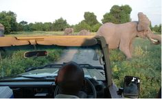 Would you like to read about our amazing camp In Botswana? You can find my blog Kati and family Telttaretkellä Botswanassa.  www,pienimaailma.fi This Is Us, Elephant, About Me Blog, Africa, Camping, Reading, Animals, Campsite, Animales