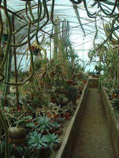 Cacti world!