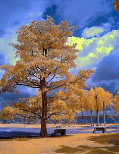 Maxfield Parrish Tree