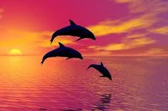 Image result for dolphins with sunset