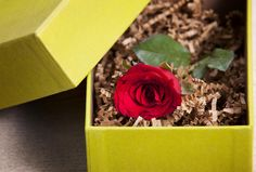 Red rose in the gift bon on wood table by Sumrit Chaleowpanya on 500px