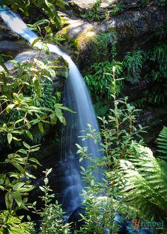 The Upper  Cascade at Liffey Falls Tasmania, Australia