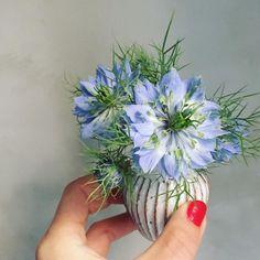 Yuka Yamada/山田裕加 (make me me)さんはInstagramを利用しています:「ニゲラ 週末つくった白いブーケに 潜ませたブルーのニゲラのあまり 白い花に埋もれるように something blue として 数輪だけ入れた たぶん誰も気づいてない #flowers #flowerstagram #somethingbule」