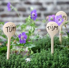 Wooden spoons as plant tags - by Tuinieren Magazine