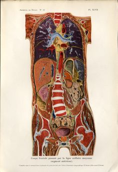 Medical Anatomy French Chirurgicale illustrée 1911