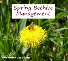 Spring chore-list for managing your honeybee hive.