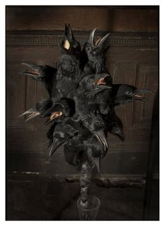 Taxidermy art with crow heads.
