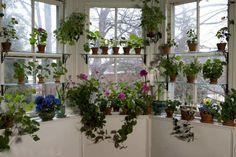 I love window gardening -- especially in the winter when there's not a lot of active growth in the garden.