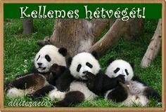 I get 3 pandas ,so cute Panda Bebe, Cute Panda, Panda Panda, Animals And Pets, Baby Animals, Panda Tour, Save The Pandas, Cute Funny Animals, Animals Beautiful