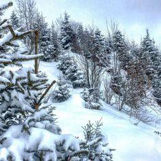 I love snow on trees -  #snow #snowing #snowflakes #snowfall #winter #holidays #wintertime #instasnow #instawinter #nature #snowshoeing #mountains #swiss #switzerland #alps #swissalps #hiking #adventures  #beautiful #amazing #photooftheday #pictureoftheday #picoftheday #bestoftheday #instalike #instadaily