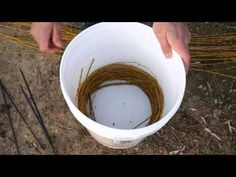 harvesting & preparing-Willow is my favorite material for making baskets with.(6min) youtube  It's easy to work with, and the end products are absolutely beautiful. Here is the best and easiest m...