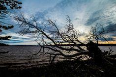 A view towards lake Inari