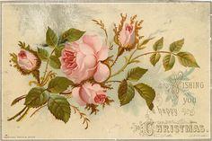 une rose rose ouverte avec trois bourgeons sur les tiges