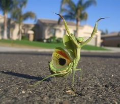 I didn't think an insect could be cute, but I love the exuberance in this guy!