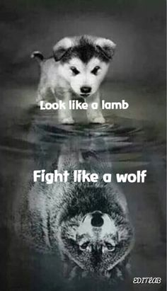 A little pup thinks that he is more then he really is a wolf, a alpha, a leader. - A little pup thinks that he is more then he really is a wolf, a alpha, a leader. Cute Puppies, Cute Dogs, Dogs And Puppies, Cute Babies, Doggies, Wolf Puppies, Cute Baby Animals, Animals And Pets, Funny Animals