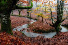 Hayedos by Juanjo Basurto - Photo 127309317 - 500px (Spain)