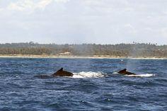 Un millón de firmantes brasileños pide un santuario de ballenas en el Atlántico