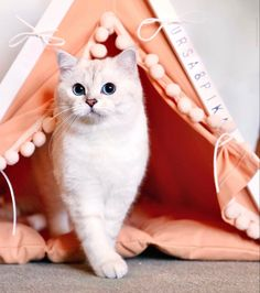 Join the cat teepee party! Glamping is always a good idea. DogAndTeepee - more than a just pet bed. Bed Tent, Teepee Tent, Cat Teepee, Teepee Party, Chase Your Dreams, Dog Bed, Glamping, Pugs, Fur Babies
