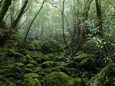 Yakushima, Japan  Mehr als 7.000 Jahre soll der Wald von Yakushima alt sein. Er ist ein dunkler, feuchter, moosiger Ort, der von der UNESCO zum Weltnaturerbe ernannt wurde. Besonders nachhaltig wird Ihr Besuch, wenn Sie in den semi-permanenten Camps übernachten, mitten im Urwald, und den Tropfen lauschen, die während der vielen Schauer von den Bäumen fallen.