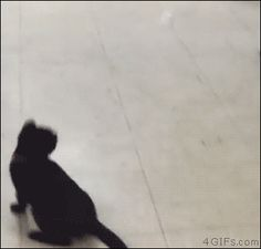 Kitten chasing a ping pong ball. [video]