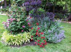 Hydrangea Limelight amp Knock Out Roses Landscape Plants