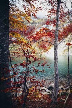"""elenamorelli: """" { autumn colors melt my heart } """""""