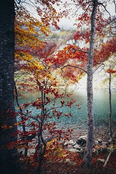 "elenamorelli: "" { autumn colors melt my heart } """