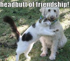 """""""Cats """"Headbutt"""" people because they make them feel safe, or they trust them."""" ~ @RTFFacts"""