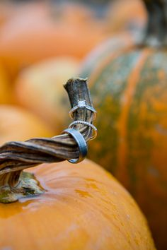 fall pumpkin wedding ring shot---ugh why didn't I do this??? Is it too late???