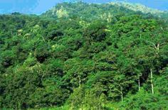 A new study released on Tuesday showed that forests across the world are capable of holding 20 percent more carbon than earlier thought. If the findings are correct then it means that extra 125 billion tonnes of carbon can increase..