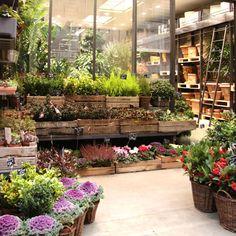 une sélection de plantes, de couleurs, de formes et de textures !