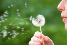 3 remèdes naturelles contre le rhume des foins (huiles essentielles, tisane...)