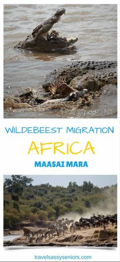 The annual wildebeest migration and zebras from Tanzania's Serengeti in Tanzania to Kenya's Maasai Mara is an event all wildlife enthusiasts should put at the top of their bucket list.