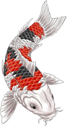 koi tattoo design by - Photo album on MTB-News.de - Thomas Fochler - - koi tattoo design by – Fotoalbum auf MTB-News.de koi tattoo design by – Photo album on MTB-News. Pez Koi Tattoo, Carp Tattoo, Koy Fish Tattoo, Koi Tattoo Design, Design Tattoos, Art Koi, Fish Art, Koi Fish Drawing, Fish Drawings