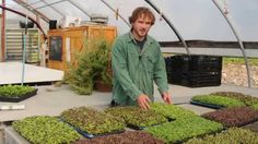 Pointers to ensure you are seeding your microgreens for optimal efficiency, health, and yield. View closeups of our popular, easy-to-grow Mild Micro Mix and . Indoor Vegetable Gardening, Planting Vegetables, Indoor Farming, Winter Plants, Winter Garden, Growing Greens, Growing Plants, Edible Garden, Easy Garden