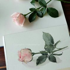 A watercolor artist from Thailand. I love this rose!