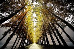 WINTER CROSSROAD by Teruyuki Kameda - Photo 181225831 / 500px