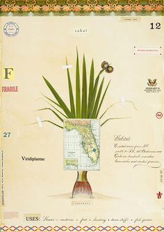Cabbage Palm with FL  Map and Fish Tail