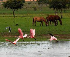 Llanos venezolanos. En la inmensidad del llano, que colorido. Con esta foto, me transporto en el recuerdo a nuestro querido país