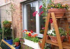 Plantas para terrazas | Cuidar de tus plantas es facilisimo.com