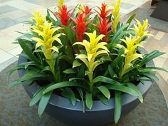 So pretty...Bromeliads