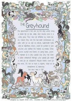 greyhound print: