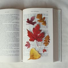 Leaves on book