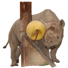 Rhino Enrichment, wonder if this could get approved...hadn't thought about small ramps or other textured items to attach larger toys to. Makes it easy to ensure no tripping hazards on chains etc.  I'd love to add some humps up the ramp that would make it a bit more fun when the ball drops.