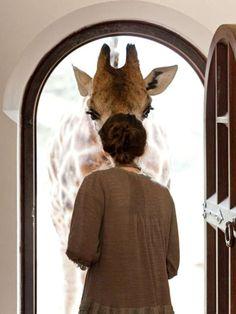 Giraffe Manor in Nairobi, Kenya; photo c/o Robin Moore