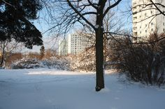 Vinter i Hagalund