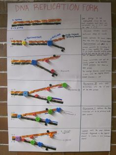 DNA Replication Poster- great idea for your DNA activities in the classroom. I love the manipulative. Biology Classroom, Biology Teacher, Ap Biology, Molecular Biology, Science Biology, Teaching Biology, Science Education, Cell Biology, Life Science