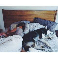 @beyjess12 // Snuggling and sharing your bed with your pet dog, a Husky
