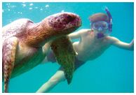 i wish!!!!!  National Geographic 360 trip to the Galapagos Islands.  Exploring the sea as much as the land.  Swimming along side sea turtles.